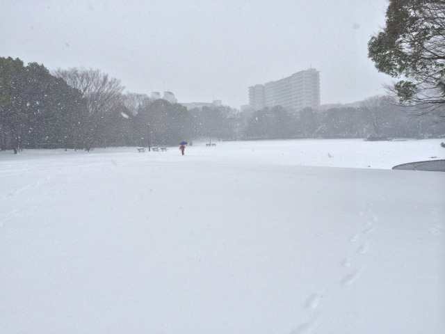 写真は2014年2月に大雪が降った際の多摩中央公園