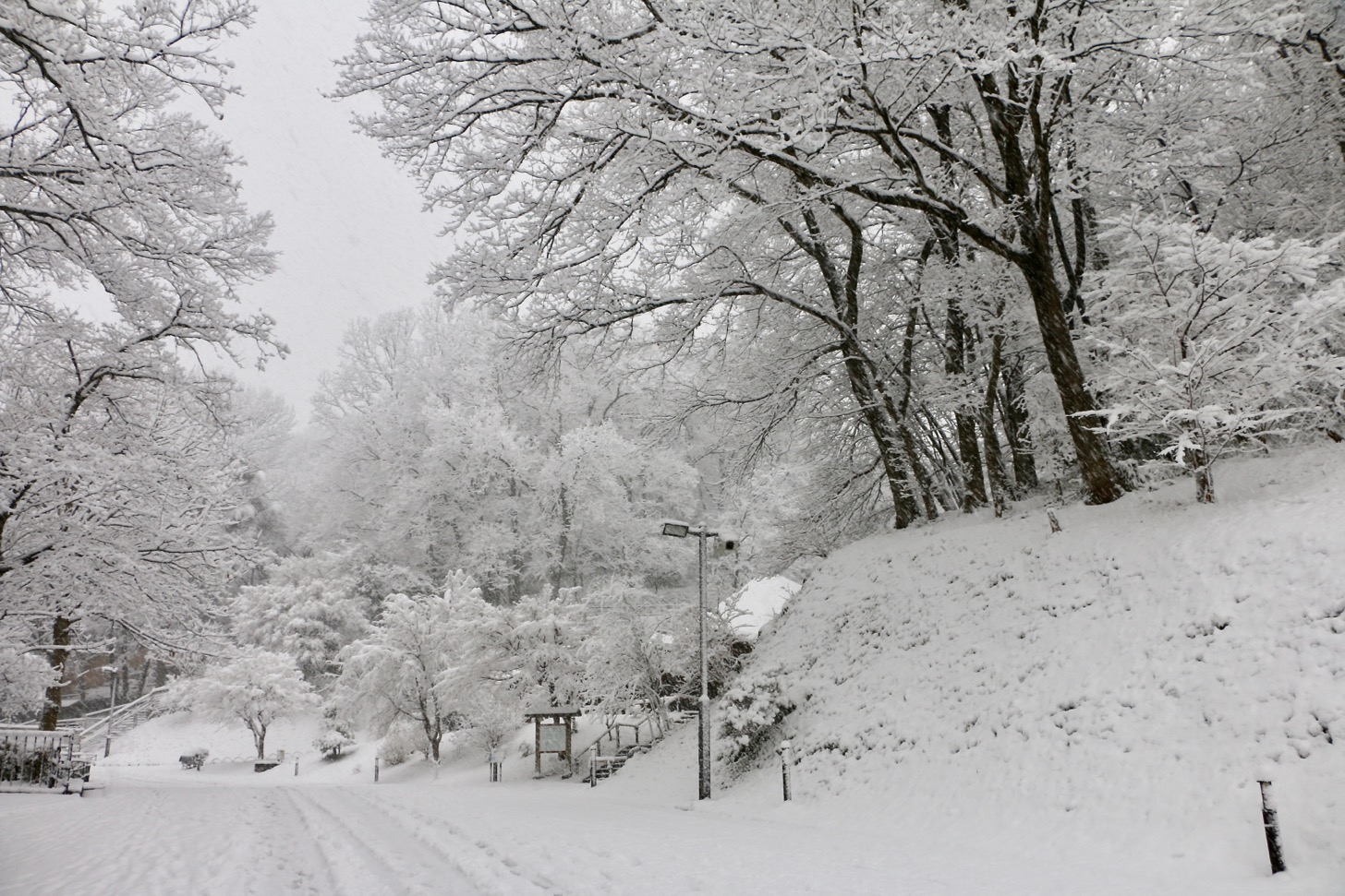 雪の多摩動物公園