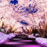 夜桜ジュエルミネーション