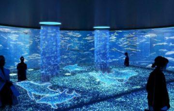 アート水族館のイメージ画像