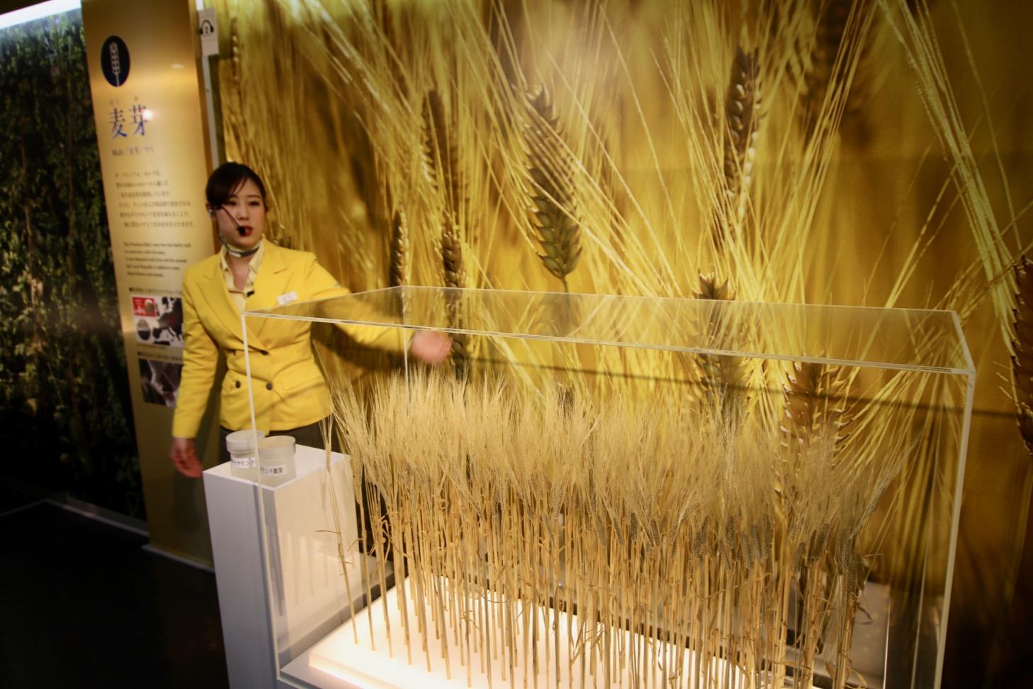 麦芽は二条大麦麦芽とチェコで産出される希少なダイヤモンド麦芽を加えることで一層上質なコクとうまみが引き出せる