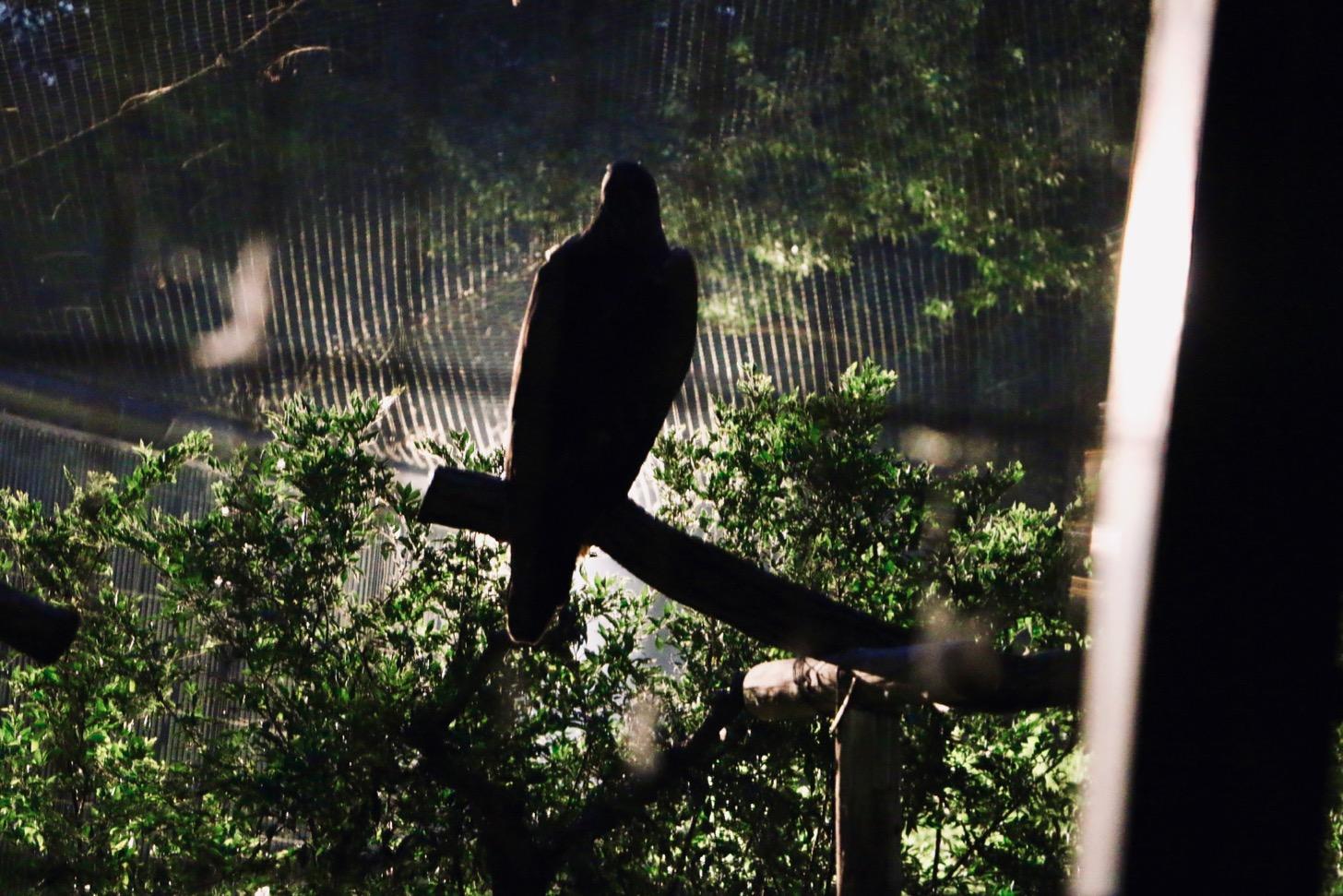 多摩動物公園 サマーナイトズー ワシ
