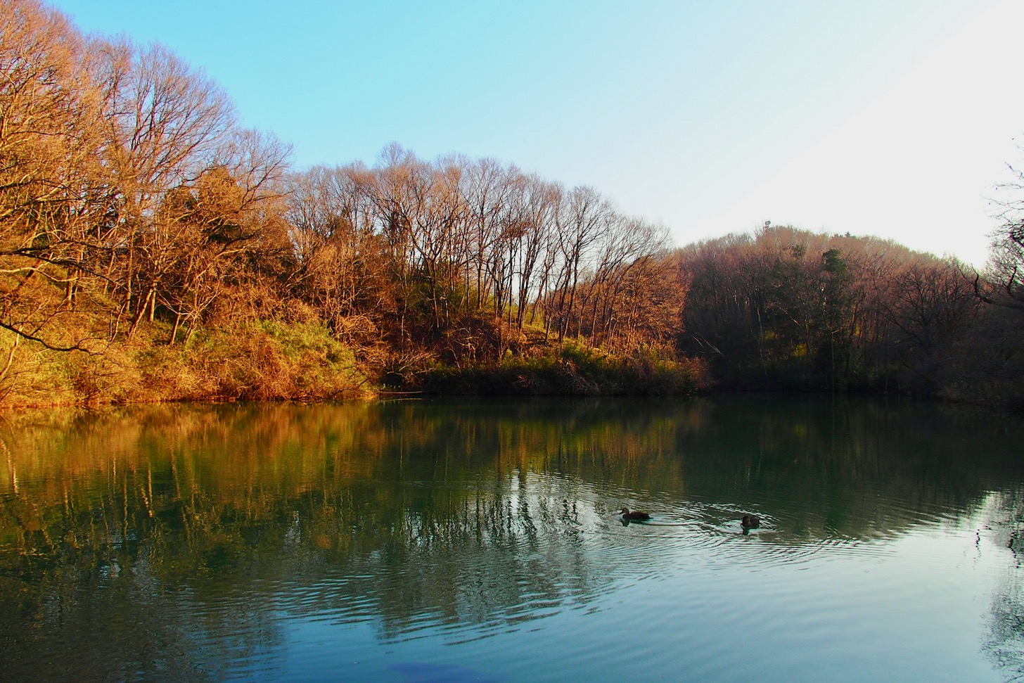 八王子市・長池公園の築池