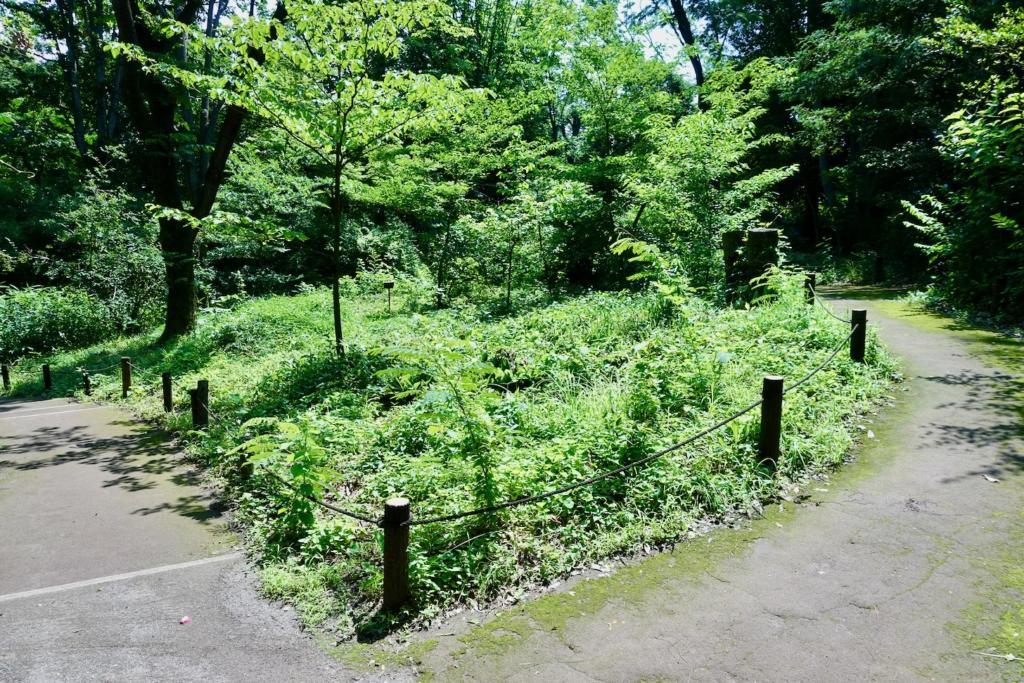 多摩センターの遺跡庭園「縄文の村」遊歩道