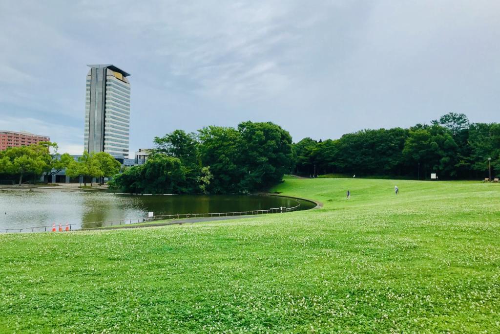 大池前の芝生広場は開放されています