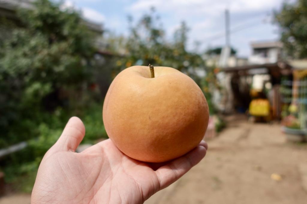 川清園の梨