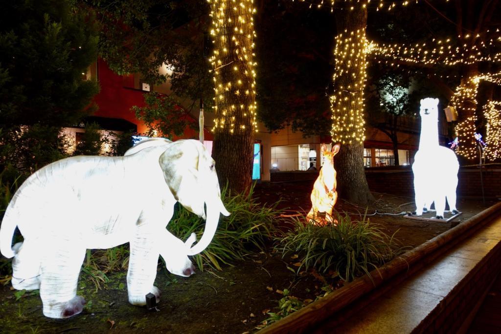 ゾウとカンガルー、アルパカの出会い