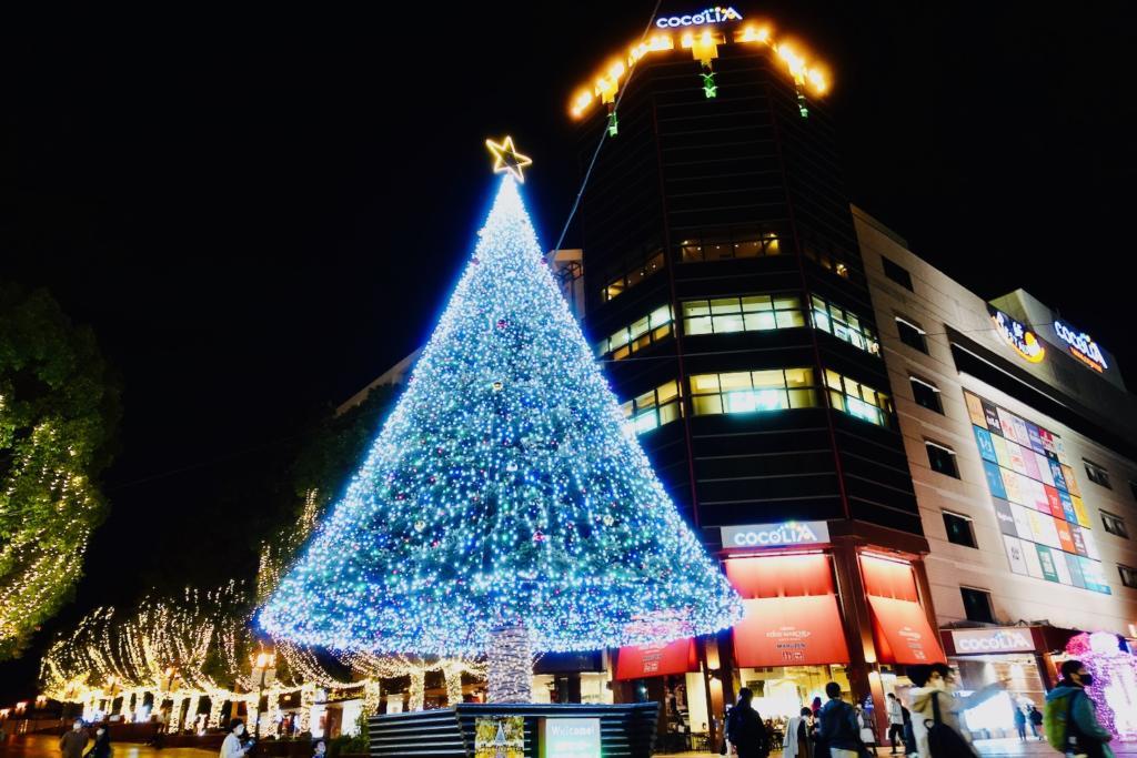 クリスマスツリーは、多摩市の友好都市「長野県富士見町」から寄贈された本物のモミの木